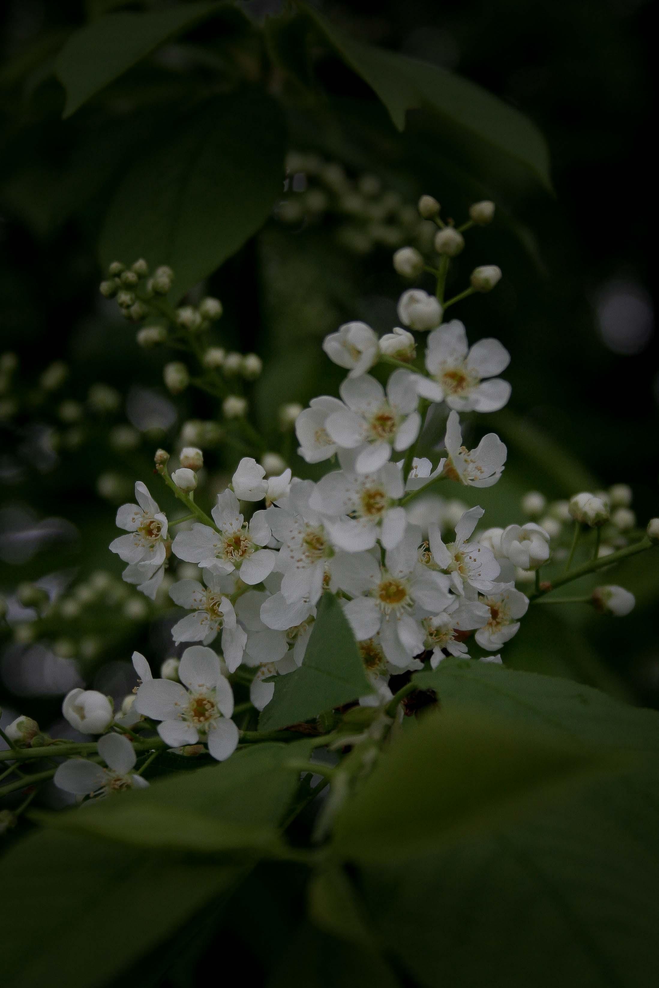 jpHumbert_Botanic-71