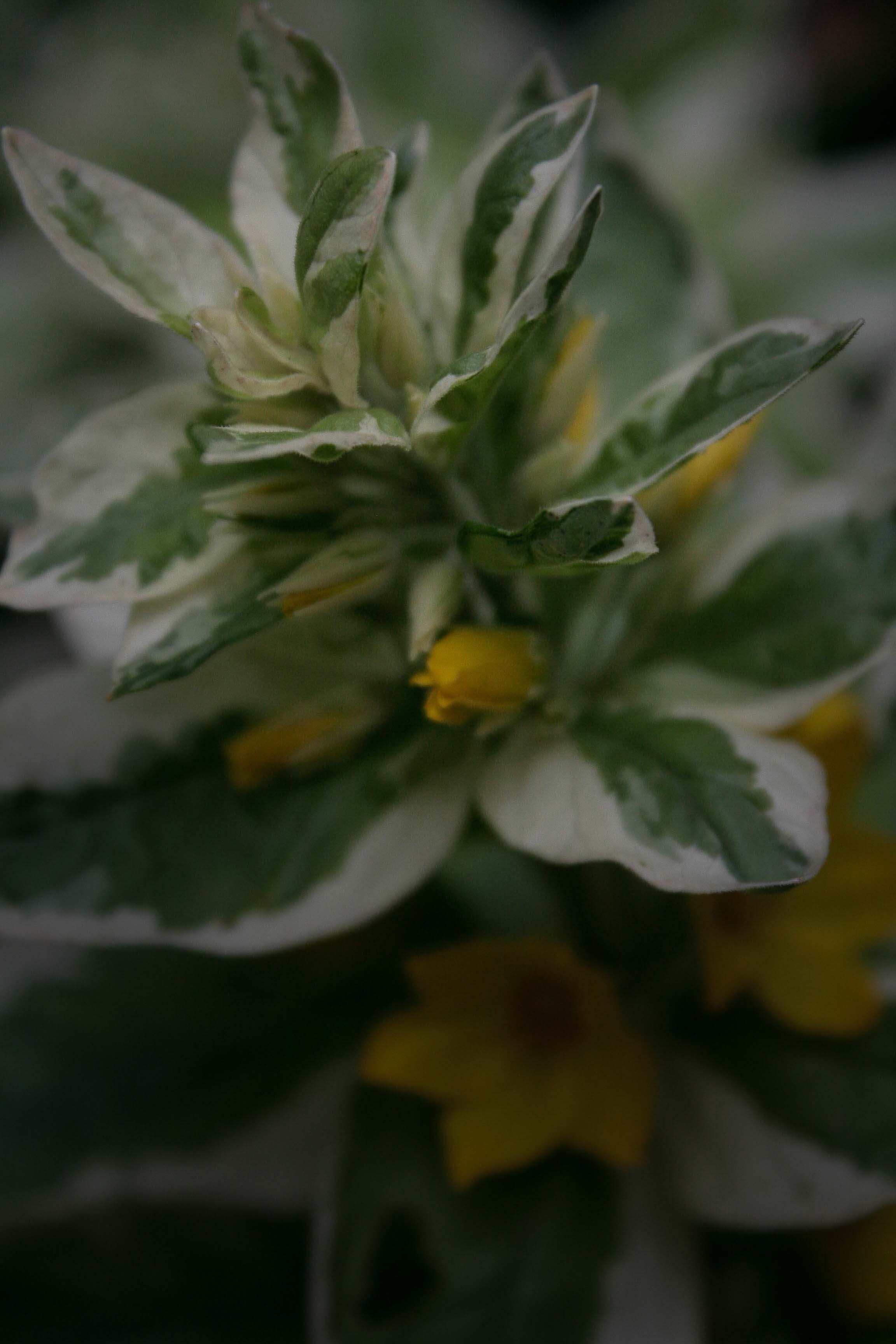 jpHumbert_Botanic-25
