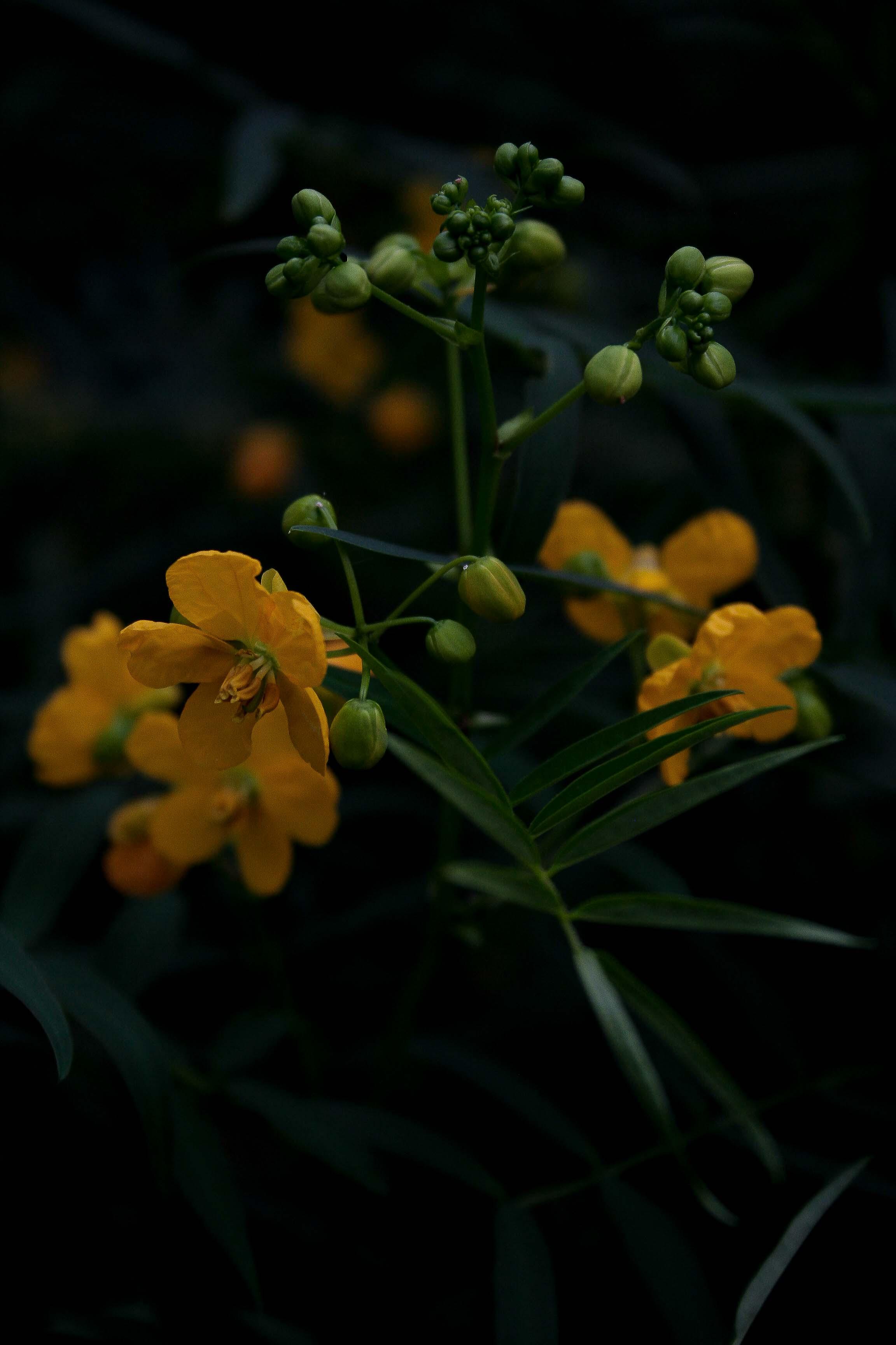 jpHumbert_Botanic-77