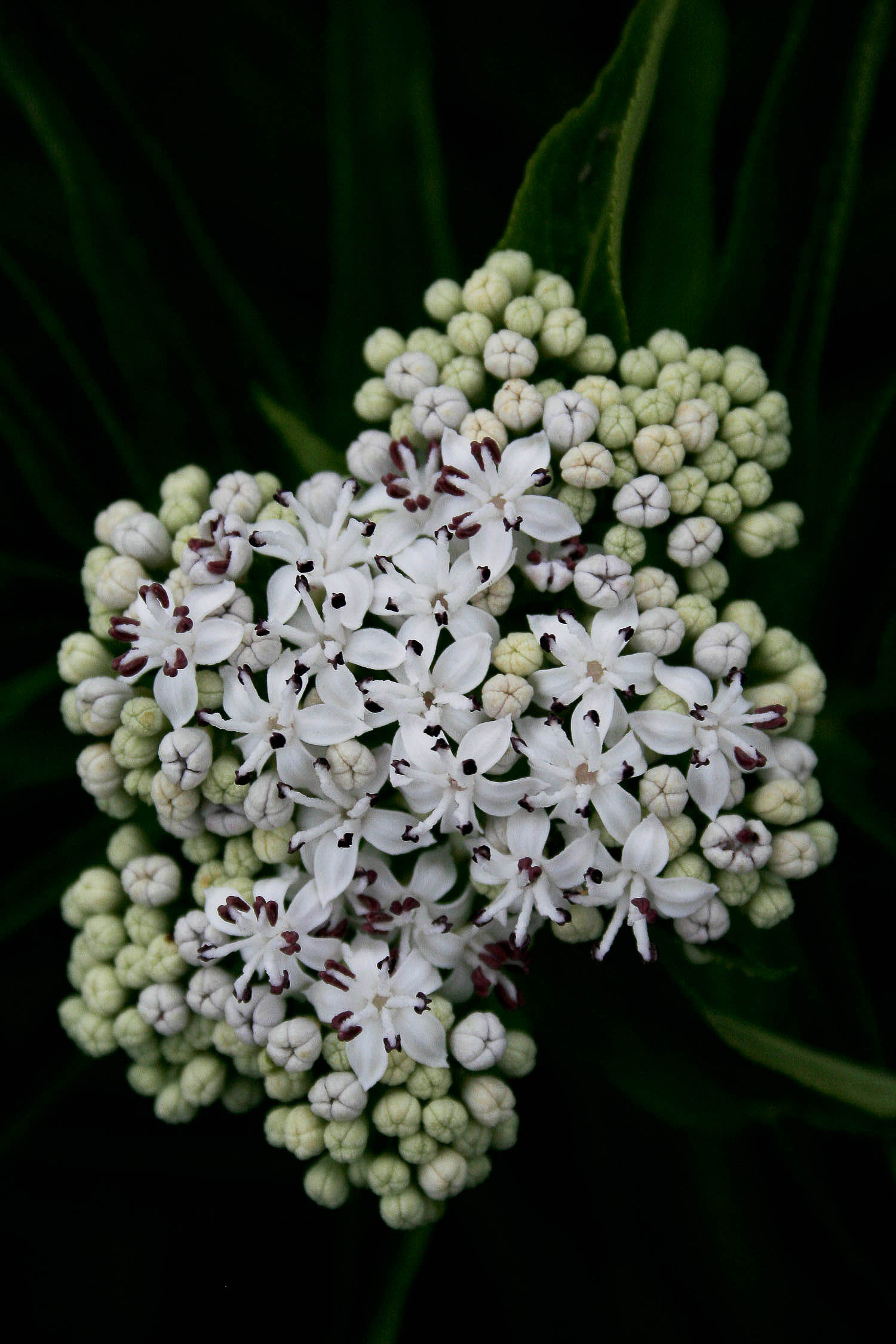 jpHumbert_Botanic-15