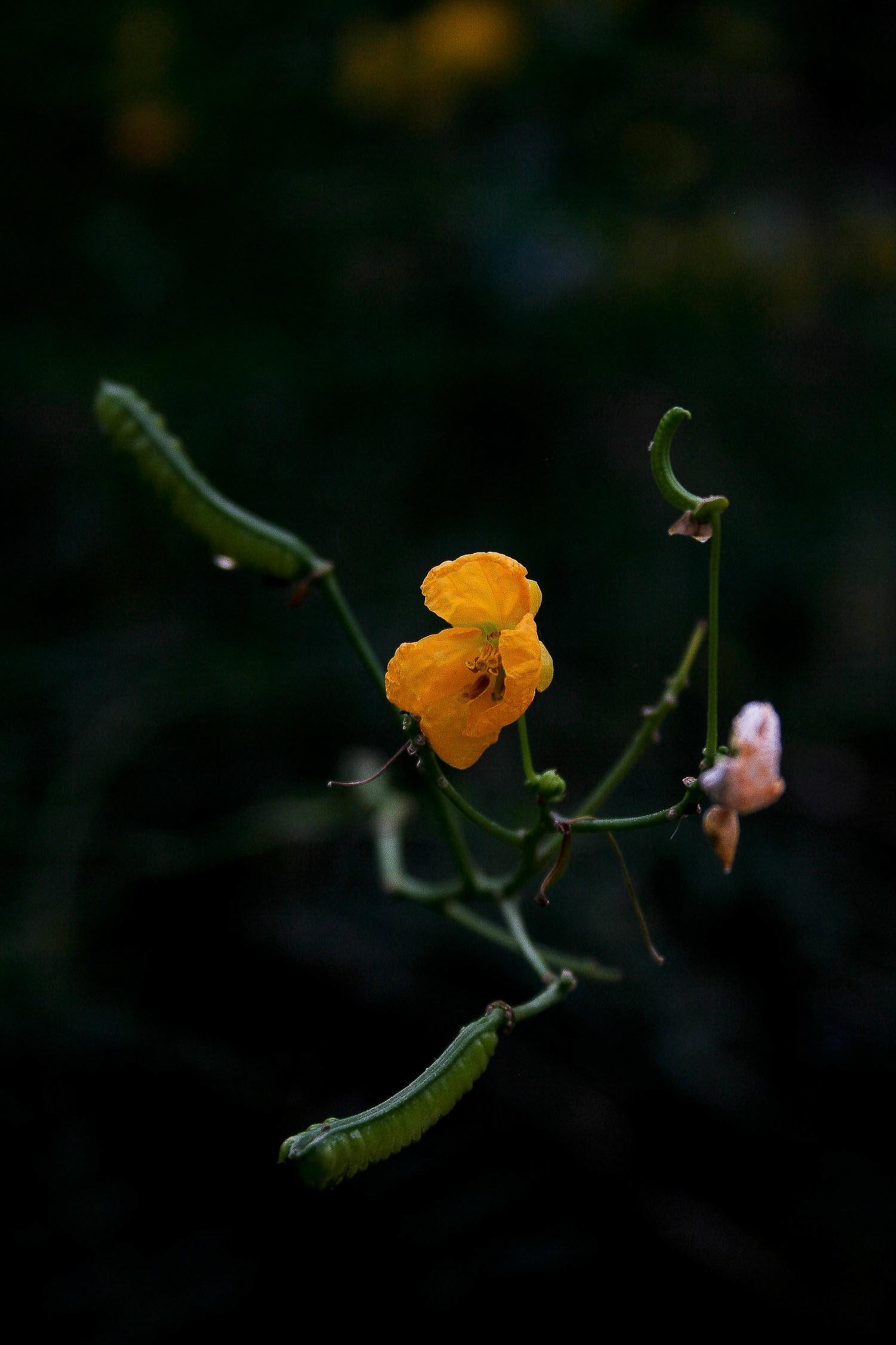 jpHumbert_Botanic-9