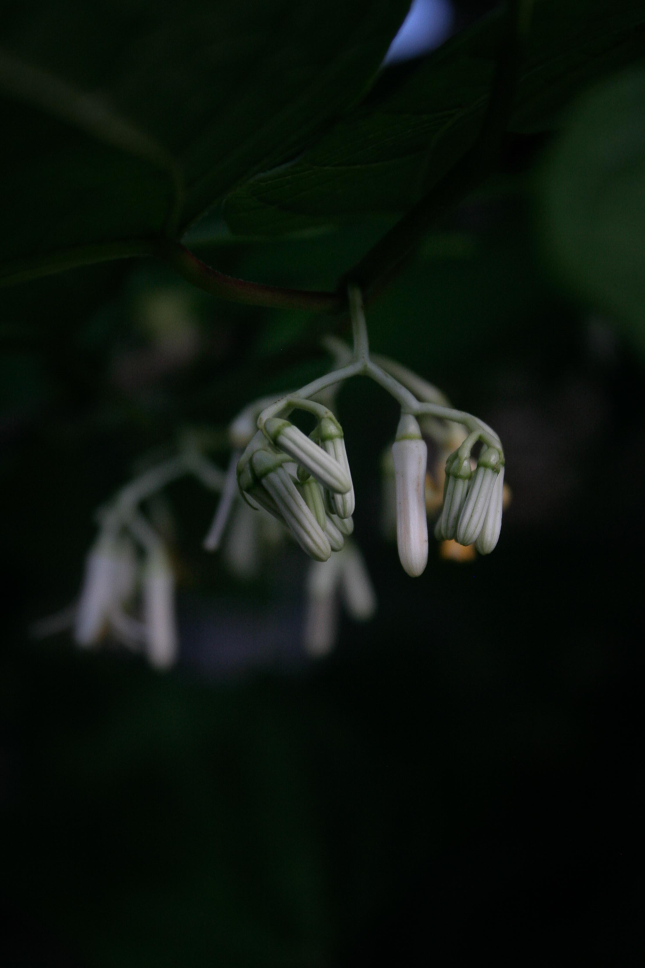 jpHumbert_Botanic-62