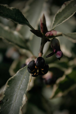 jpHumbert_Botanic-20