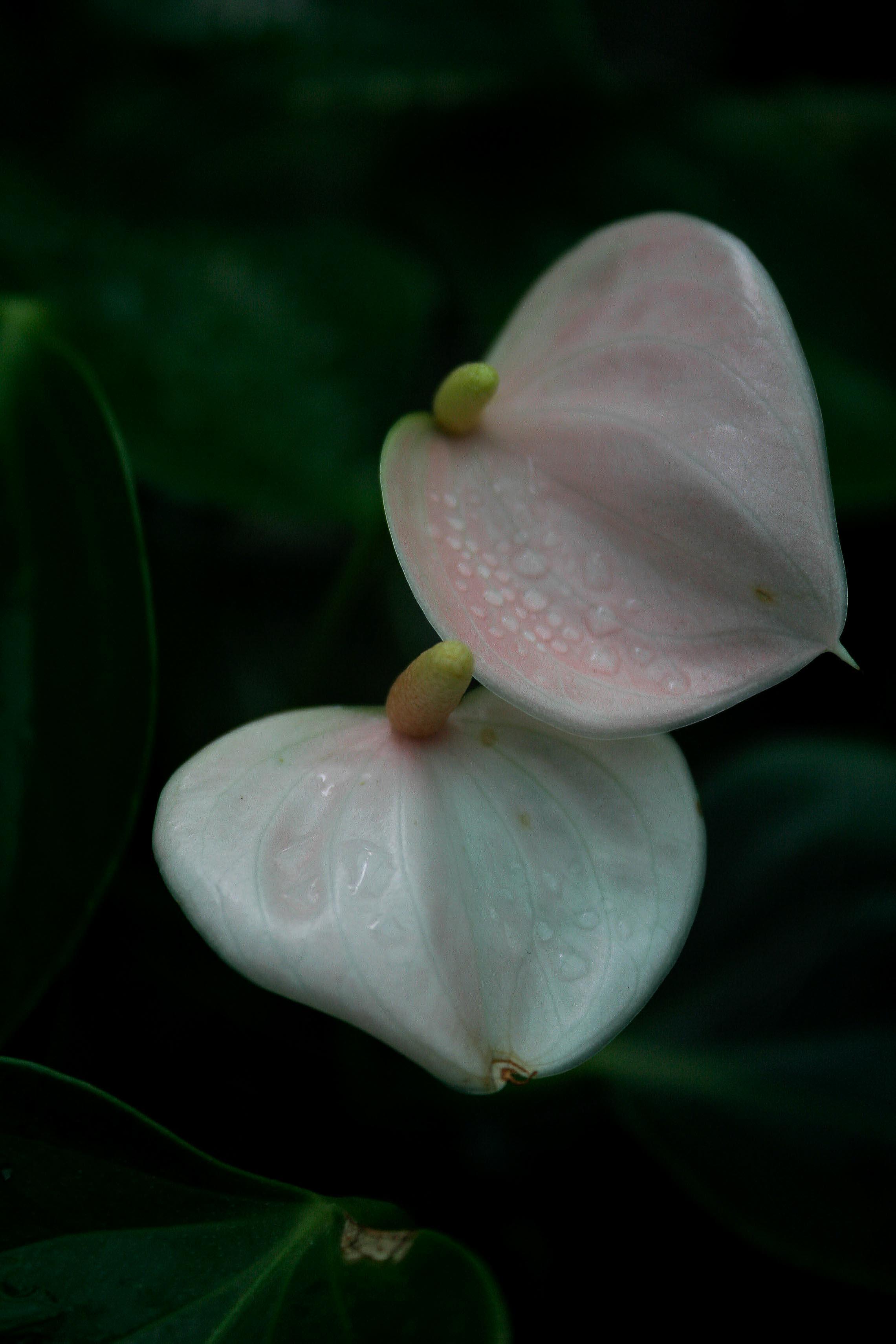jpHumbert_Botanic-16