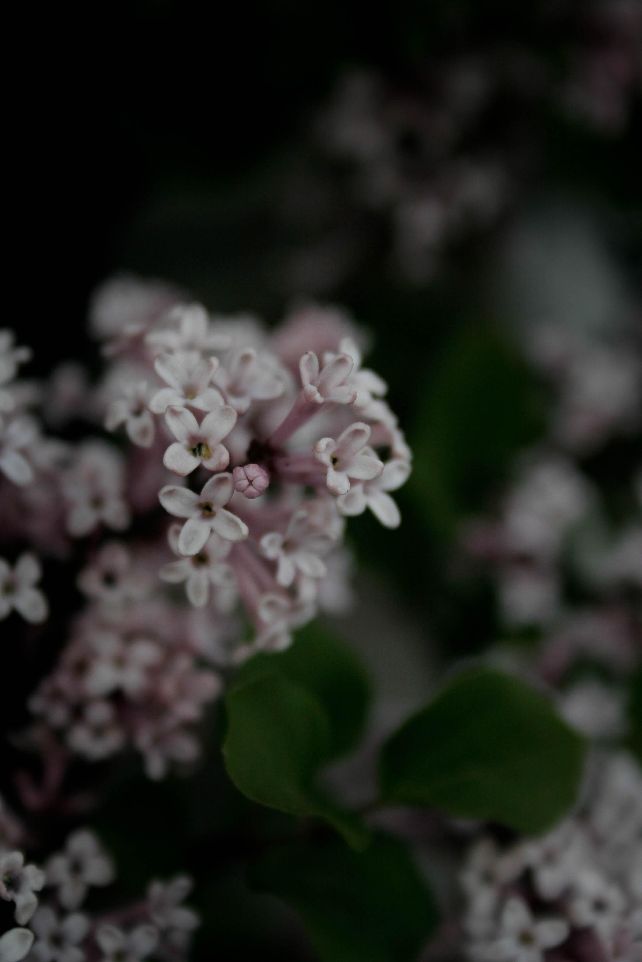jpHumbert_Botanic-47