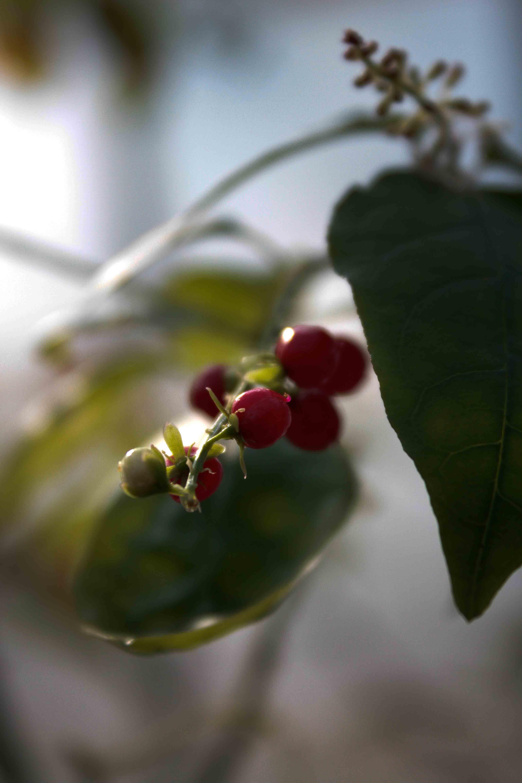 jpHumbert_Botanic-53