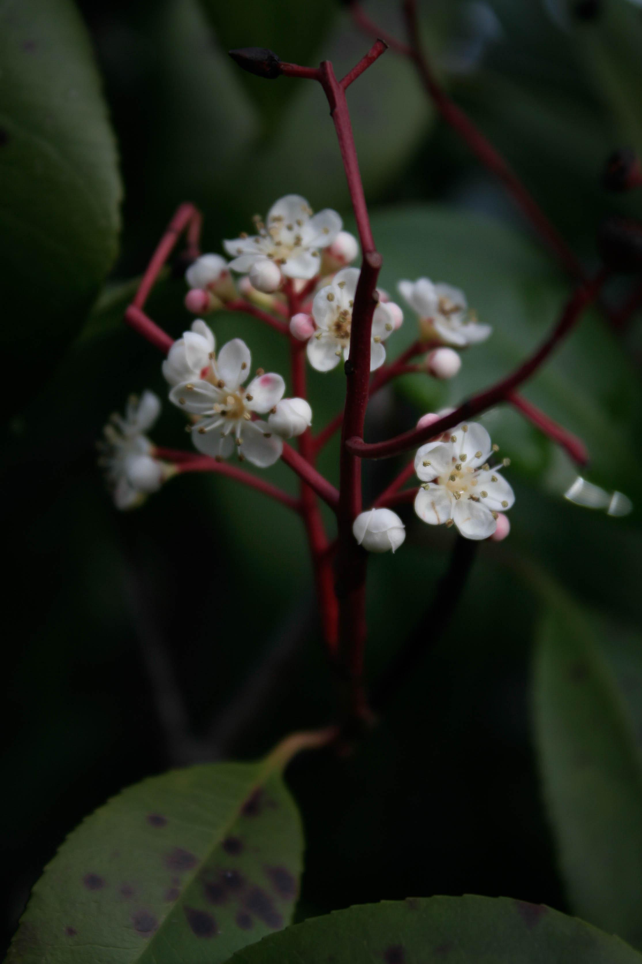 jpHumbert_Botanic-32