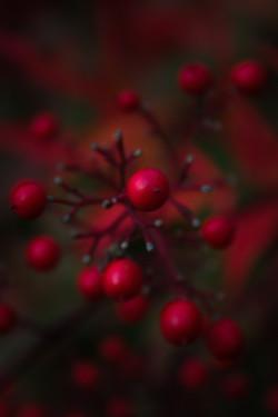 jpHumbert_Botanic-34
