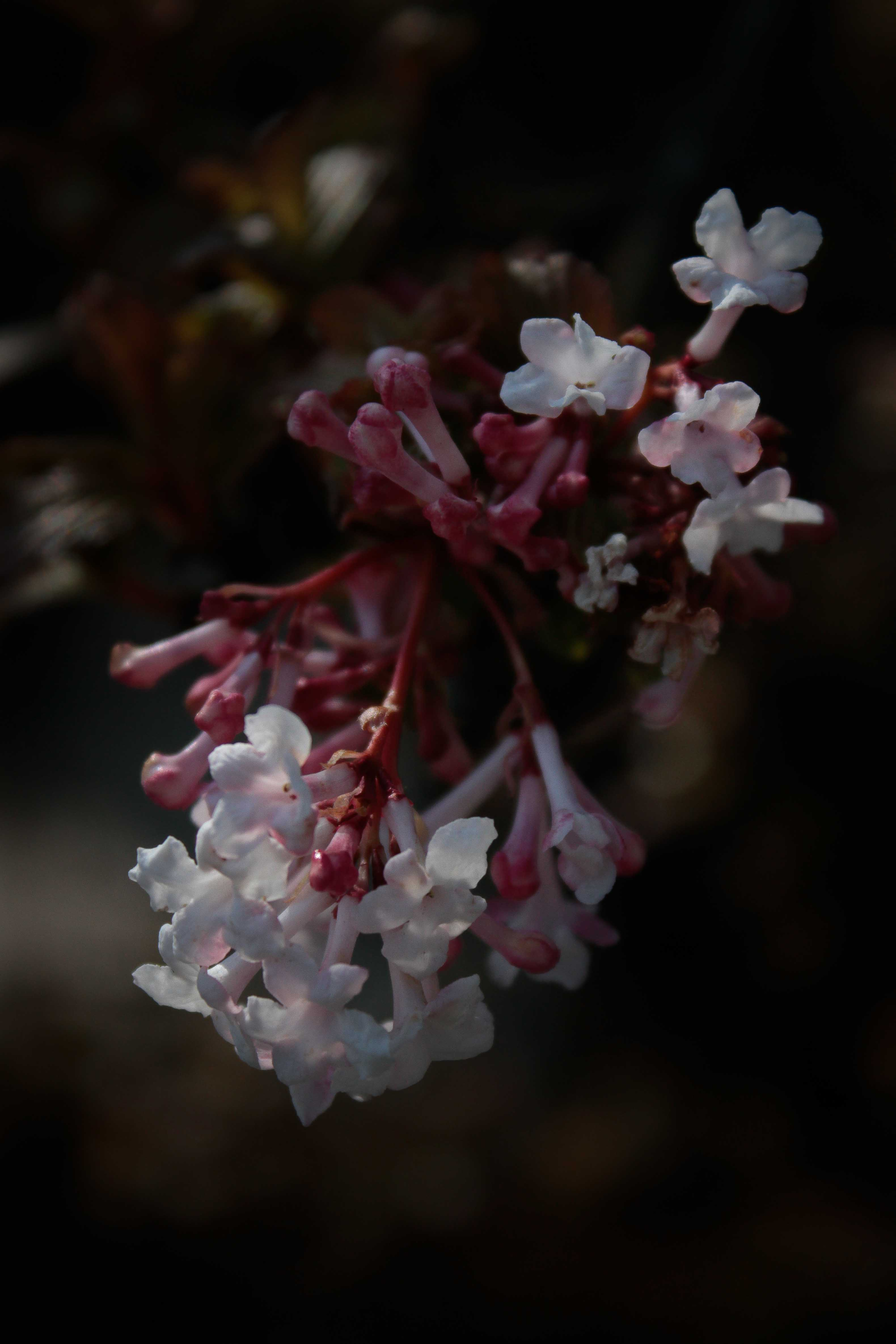 jpHumbert_Botanic-51