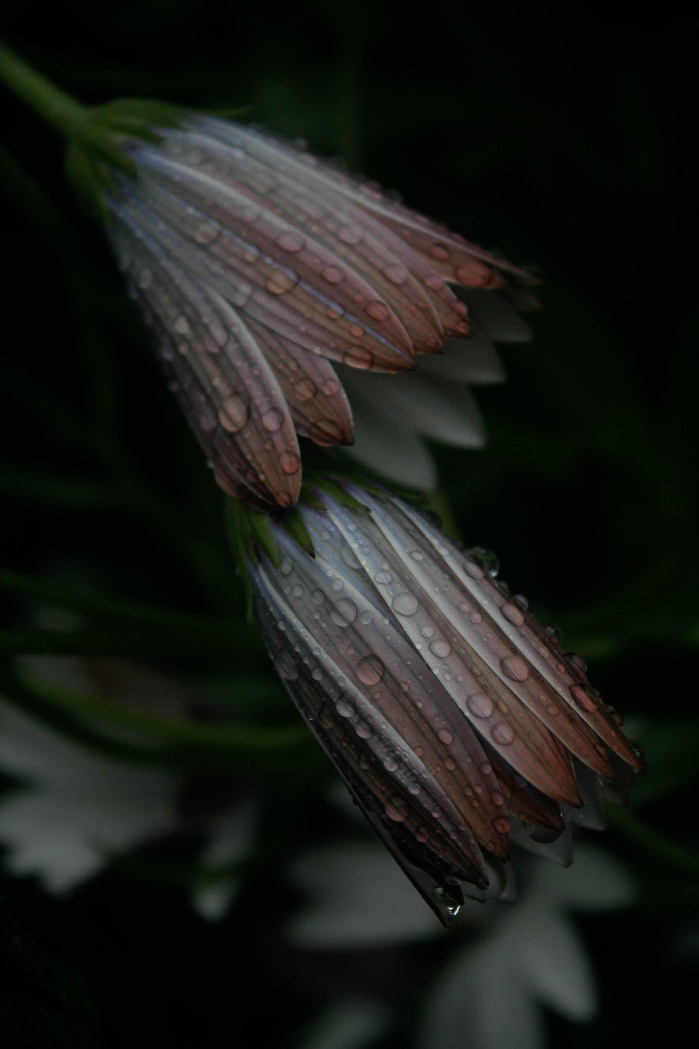 jpHumbert_Botanic-38