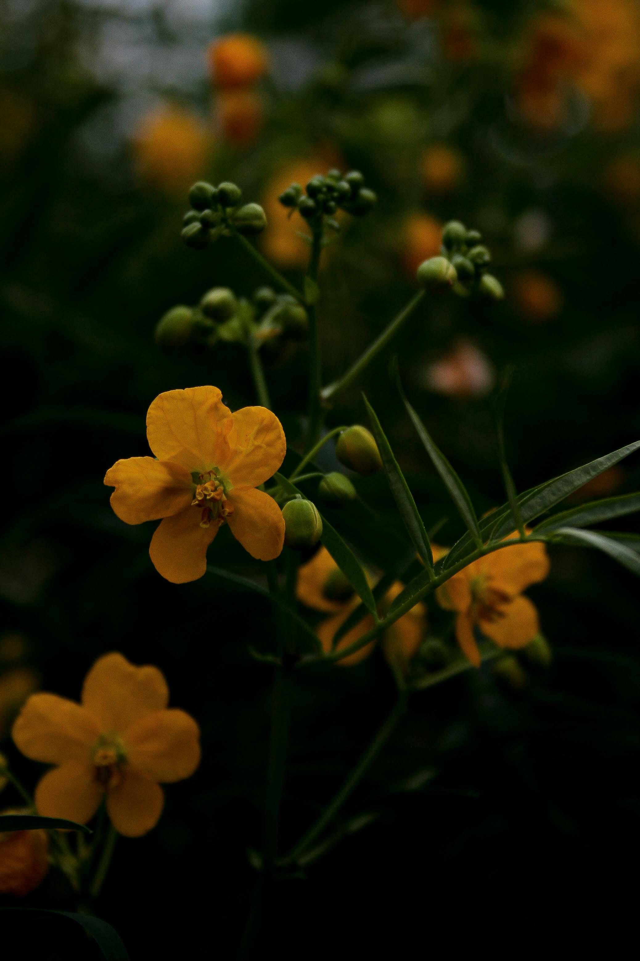 jpHumbert_Botanic-4