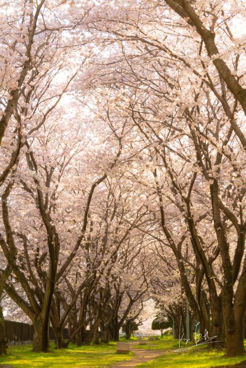Heiwa Shimin Koen, Oita city, Oita/大分県大分市平和市民公園