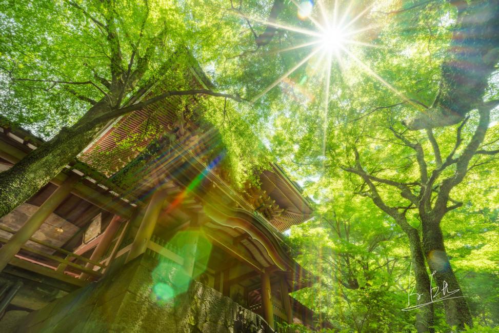 Yusuhara Hachimangu Shrine, Oita/大分県大分市柞原八幡宮