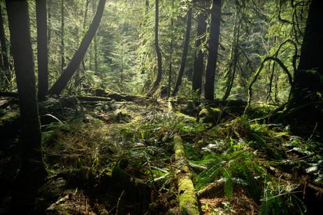 Lynn Canyon Park, North Vancouver/ノースバンクーバー・リン・キャニオン・パーク
