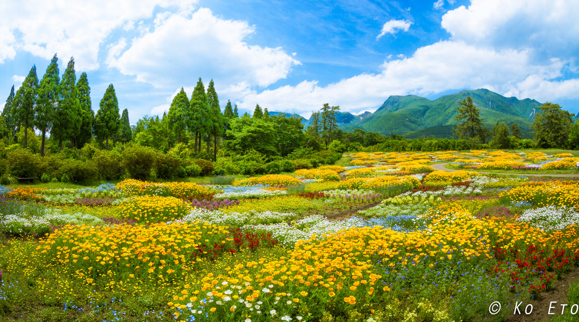 Kuju Flower Park, Taketa city, Oita/大分県竹田市久住町、久住花公園