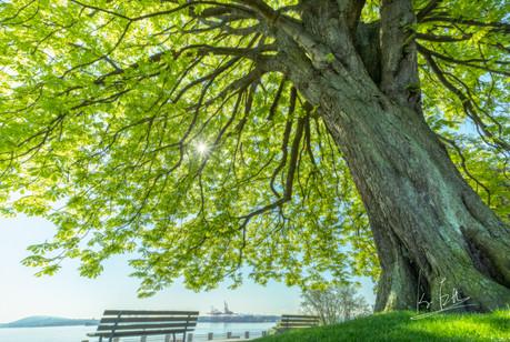 Stanley Park, Vancouver, B.C/バンクーバー・スタンレーパーク