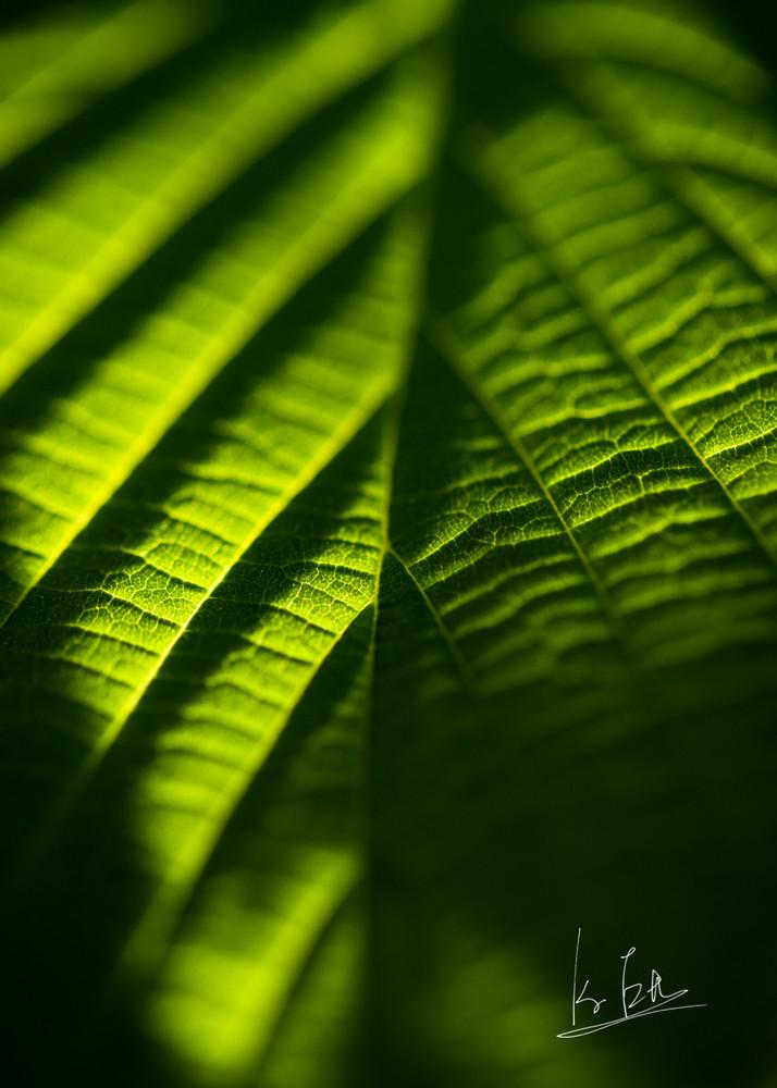 Leaf in sunset