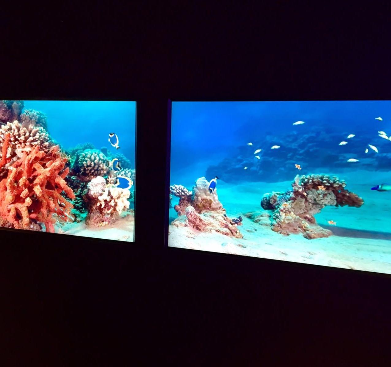 Yù Aquarium