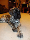 Gryphon Mastiff Puppies
