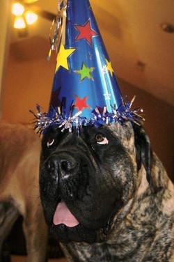 Brinkley's 2nd Birthday