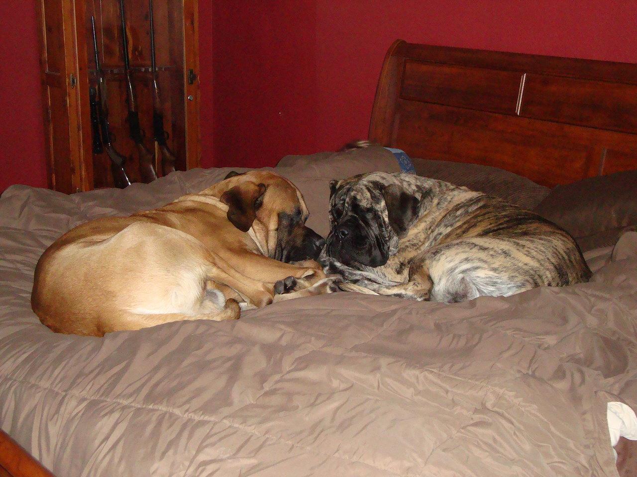 Boone & Brinkley Cuddle