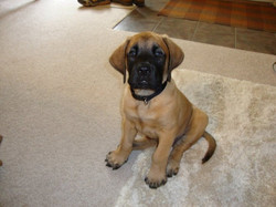 Baby Boone 2010