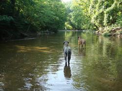 Boone & Brinkley Hiking