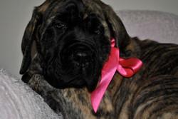Baby Brinkley 2010