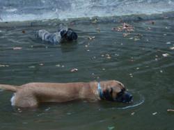 Boone & Brinkley Swimming