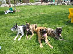 Alexander, Drizzle, Boone & Brinkley