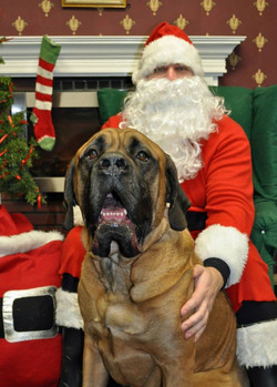 Boone Christmas 2013