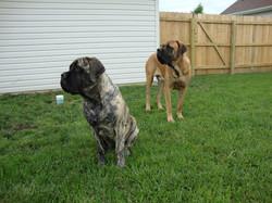 Boone & Brinkley Summer 2011