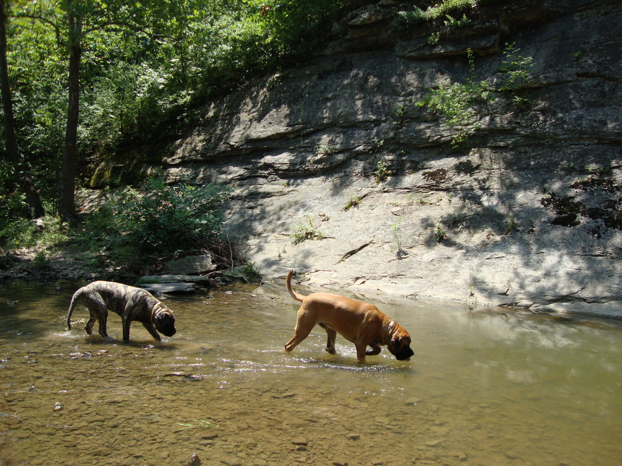 Boone & Brinkley Hiking