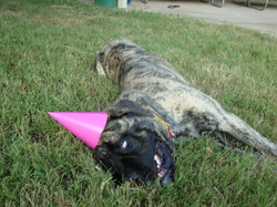 Partied Out Brinkley Summer 2011