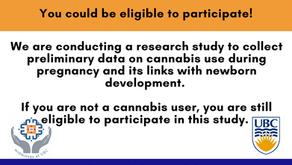 Cannabis Use in Pregnancy Study - Recruitment Poster