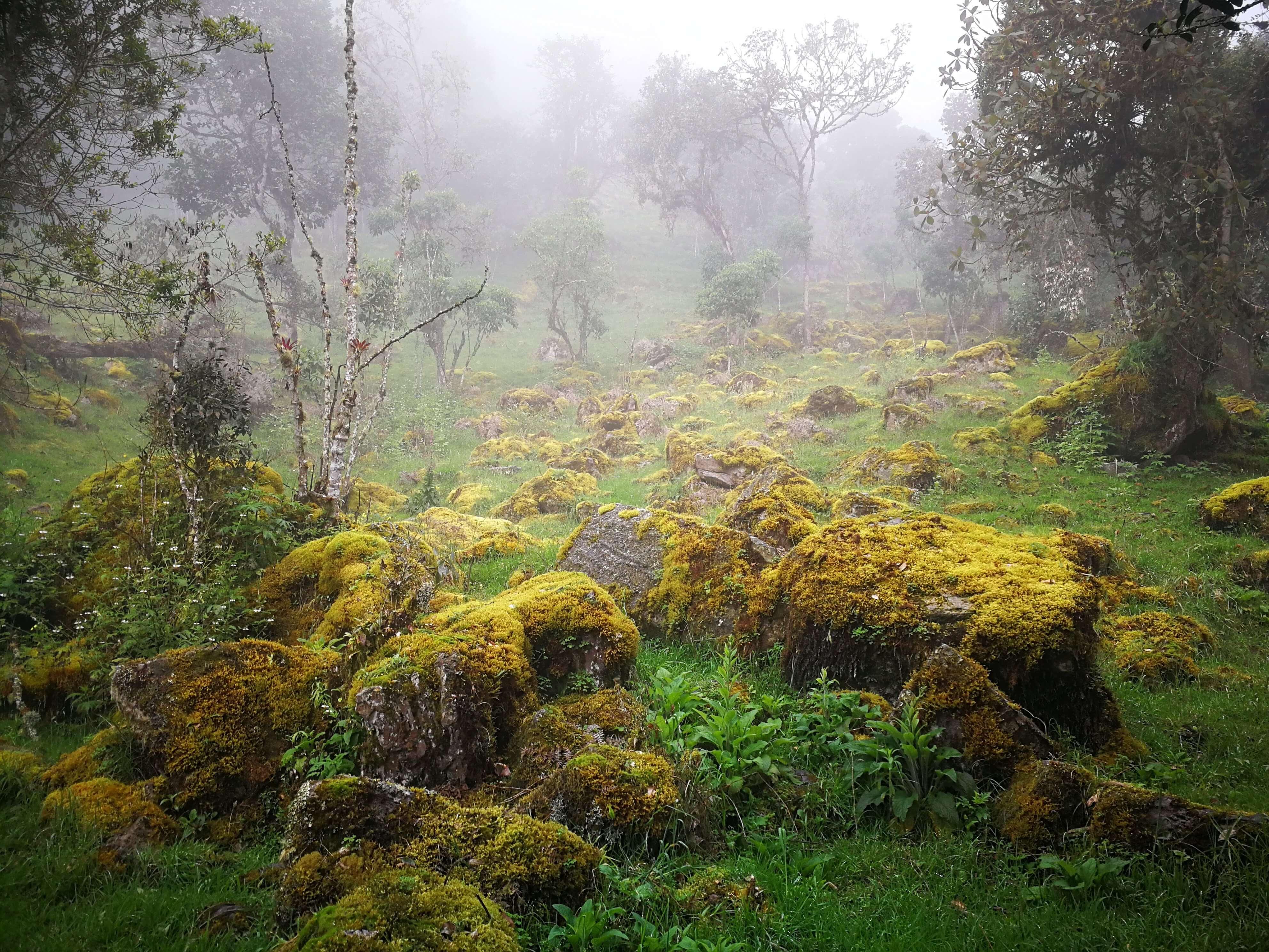 Mlžný les - Cloud forest