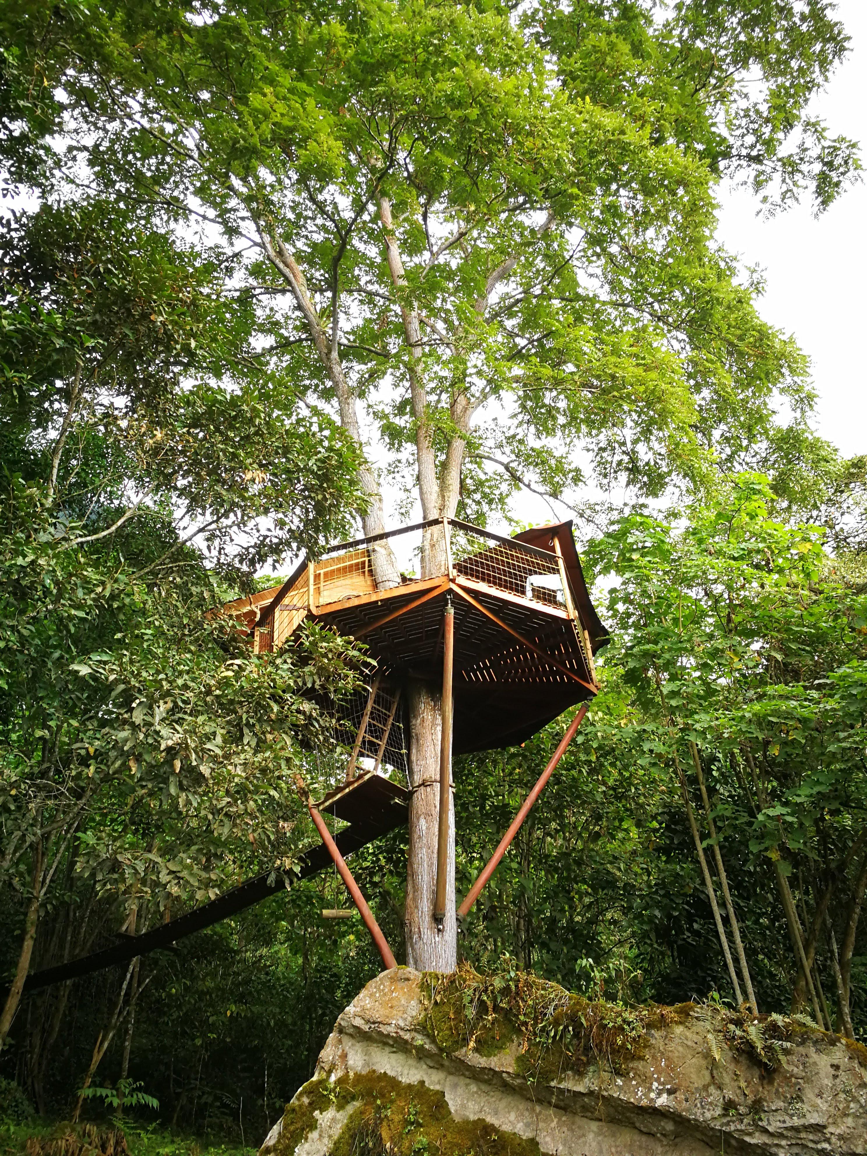 Tree house hotel experience