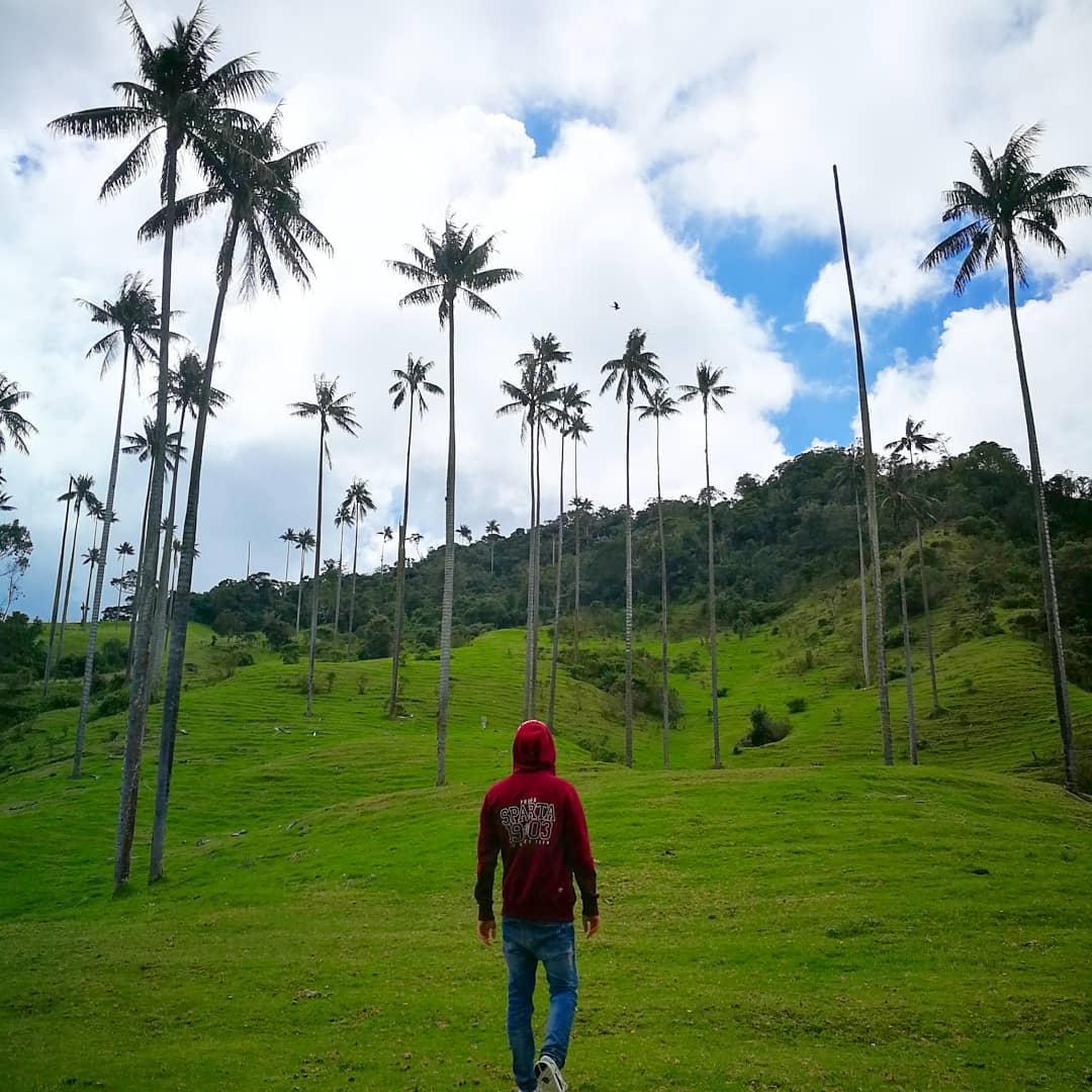 Unique mountain palms
