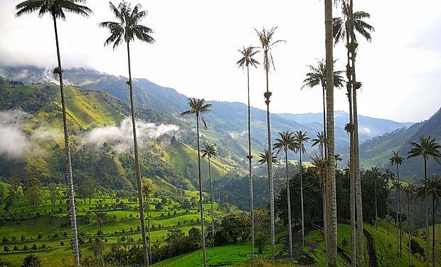 Horské palmy v Kolumbii - Salento