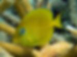 Culebra-Island-Adventures_Group-2012.10.