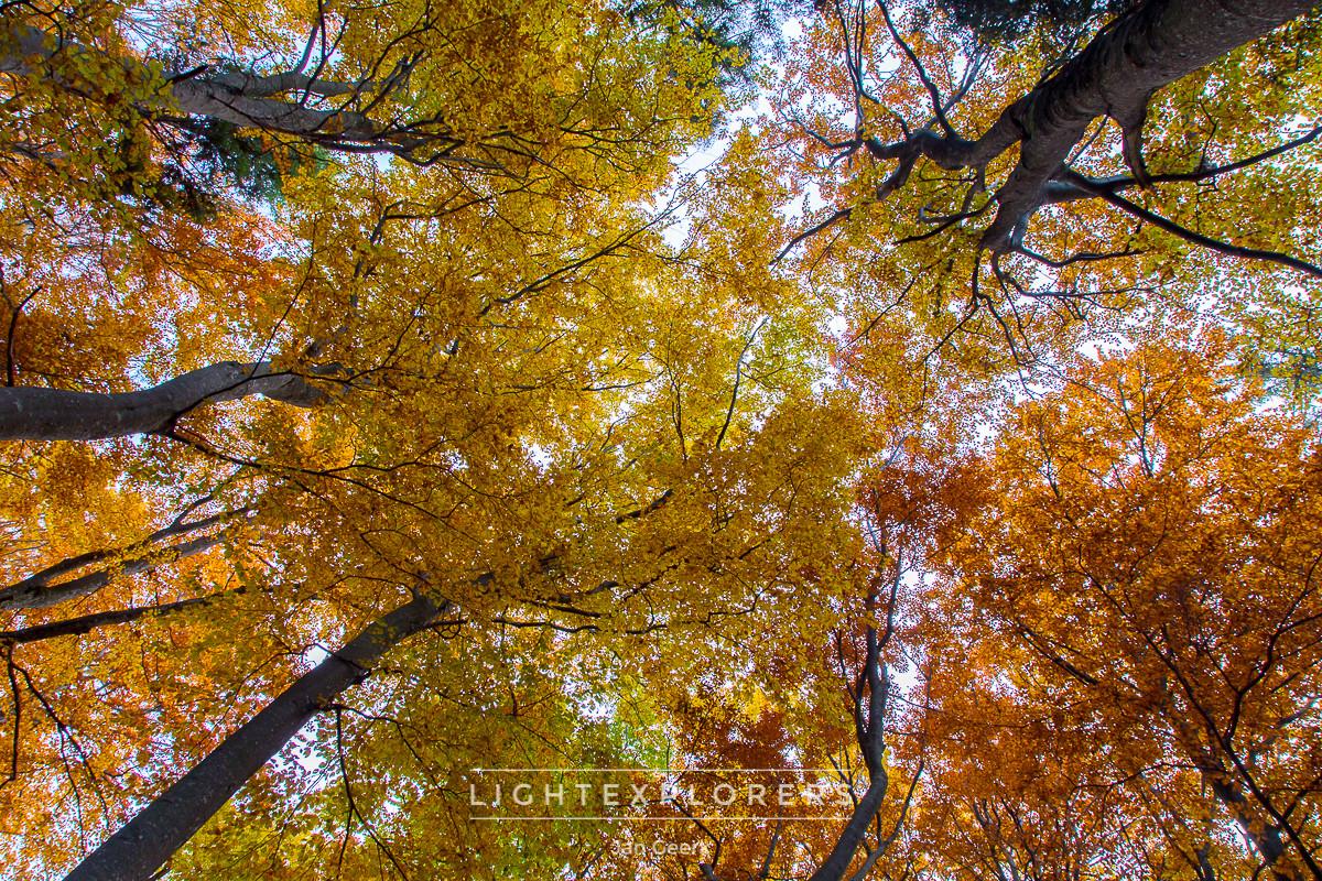 Goldene Herbsttage