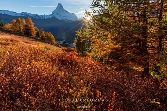 Matterhorn-Herbst-Heide-Zermatt