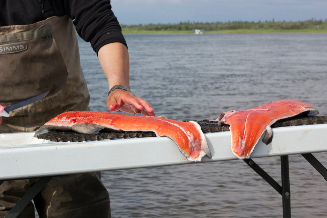 Nushagak River King Salmon Fishing