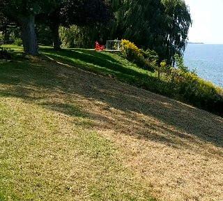 Hillside Clean-up (After)