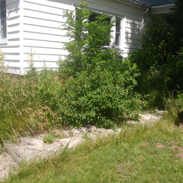 Garden Clean-out (Before)