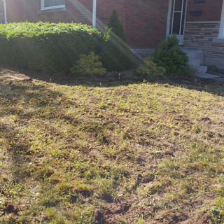 Sod Replacement (Before)