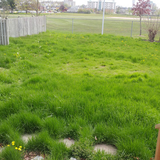 Neglected Lawn (Before)