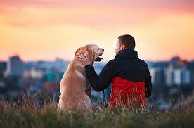 How Can Dogs Affect Your Overall health?