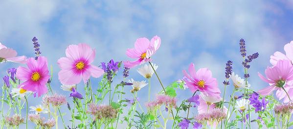 bloom-blossom-flora-40797.jpg