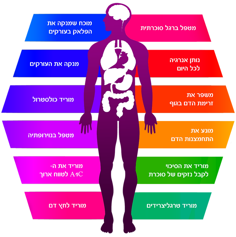 Human-Body-Info-heb.png